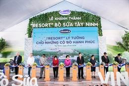 'Resort' bò sữa Vinamilk Tây Ninh- ngôi nhà lý tưởng của những cô bò hạnh phúc