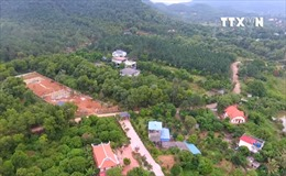Chờ đợi xử lý dứt điểm các vi phạm rừng tại Sóc Sơn