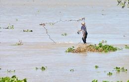 Biến đổi khí hậu sẽ làm 40% diện tích ĐBSCL bị ngập nước