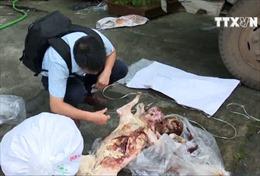 Săn bắn, giết động vật rừng trái phép bị phạt đến 400 triệu đồng