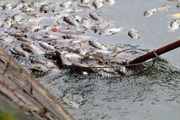 Cá chết nổi trắng hồ Văn Chương, bốc mùi hôi nồng nặc
