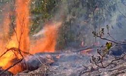 Khoảng 900 người tham gia chữa cháy rừng ở Nghệ An trong đêm
