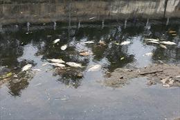 Giải thích hiện tượng cá chết trên sông Tô Lịch