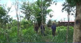 Bình Phước bắt nhóm đối tượng trộm cây gỗ quý