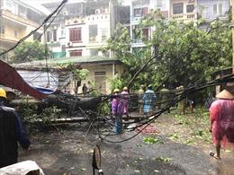 Ảnh hưởng bão số 3 khiến nhiều cây lớn, cột điện đổ tại Hà Nội
