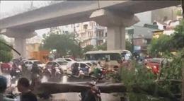 Một người tử vong, một người bị thương do cây đổ ở Hà Nội