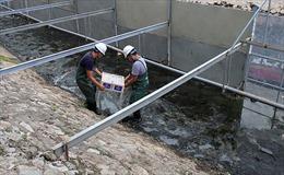 Thủ tướng giao Hà Nội đánh giá kết quả làm sạch sông Tô Lịch bằng công nghệ Nhật Bản