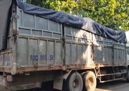Lái xe đổ trộm rác thải bỏ trốn bị rắn cắn nhập viện