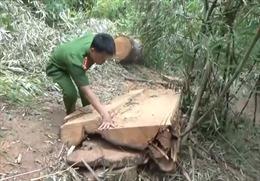 Khẩn trương xử lý vụ phá rừng đặc dụng tại Đắk Lắk