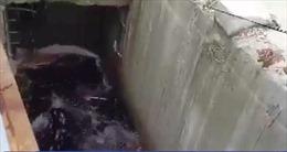 Lộ diện 'nghi phạm' vụ nước biển đổi màu tại Quảng Ngãi