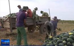 Hàng trăm xe nông sản ùn tại cửa khẩu do Trung Quốc tiếp tục đóng biên giới