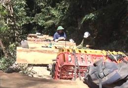 Kon Tum lại phát hiện 'đoàn xe lâm tặc' chở gỗ trái phép