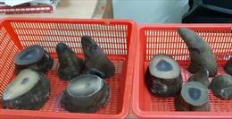 Hơn 6 kg sừng tê giác châu Phi chuyển lậu về sân bay Tân Sơn Nhất
