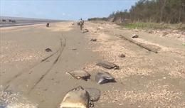Bến Tre phát hiện hàng trăm bao tải trôi dạt vào bờ biển