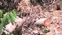 Điều tra vụ mở đường để phá rừng giáp ranh tại Phú Yên