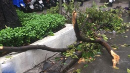 Hai người bị thương do nhánh cây rơi xuống đường