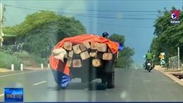 Vận chuyển gỗ lậu, chống trả lực lượng chức năng