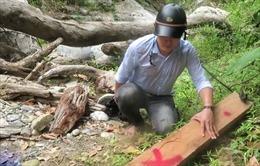 'Lâm tặc' ngang nhiên phá rừng phòng hộ ở Quảng Ngãi