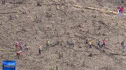 Rầm rộ phá rừng, chiếm đất ở Phú Mỡ