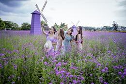 Giới trẻ rủ nhau check-in vườn oải hương thảo tím lãng mạn ở Hà Nội
