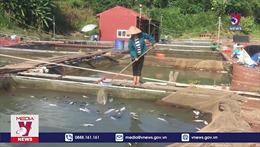 Cá chết hàng loạt trên sông Đà