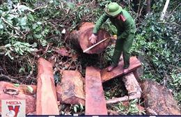 Đấu tranh chuyên án phá rừng quy mô lớn