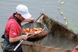 Cá chép đỏ Thủy Trầm tiễn Táo quân ế ẩm vì COVID-19