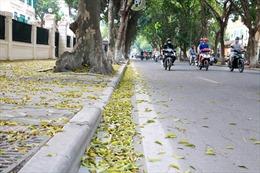 Mùa khô ở vùng duyên hải Nam Trung Bộ còn kéo dài, phòng trừ sâu bệnh cho cây ăn quả