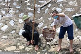 Hà Nội: Sau cơn mưa lớn trong đêm, cá tràn về sông Tô Lịch