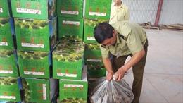 Xử lý gần 1 tấn dược liệu ẩm mốc ở làng nghề truyền thống Ninh Hiệp
