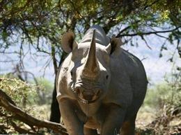 Đổi hình ảnh truyền thông mới về bảo vệ động vật hoang dã