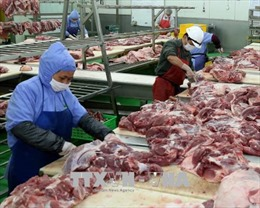 Chi phí trung gian trong giá thành thịt lợn chiếm tới 70 - 90%