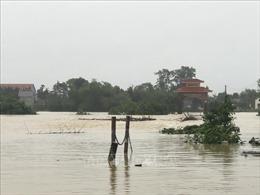 Xuất cấp 5.000 tấn gạo dự trữ hỗ trợ 5 tỉnh miền Trung