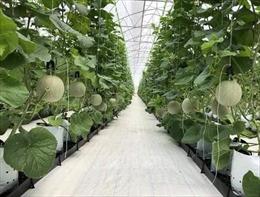Đầu tư tín dụng vào nông nghiệp công nghệ cao còn nhiều hạn chế