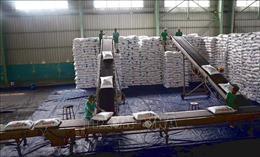 Giá phân bón tăng cao tại Đồng bằng sông Cửu Long