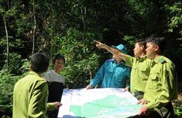 Hiệu quả từ công tác xã hội hóa trong bảo vệ rừng ở Tuyên Quang