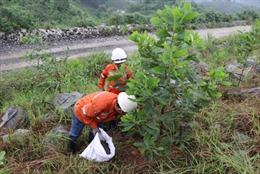 Tăng cường cải tạo phục hồi môi trường tại Mỏ đa kim Núi Pháo