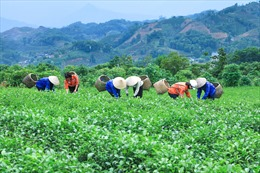 Masan Resources  hỗ trợ phát triển kinh tế địa phương và bảo vệ môi trường