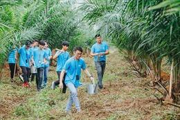 Run For Green 2019 chung tay trồng 20.000 cây xanh trên toàn cầu