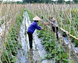 Nhiều giải pháp hỗ trợ nông dân tăng năng suất vụ mùa