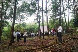 Tạo nguồn nguyên liệu gỗ chất lượng - Bài cuối: Tính toán đầu tư phù hợp