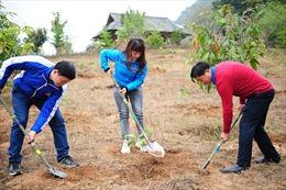 Phát động Tết trồng cây 'Đời đời nhớ ơn Bác Hồ' Xuân Canh Tý
