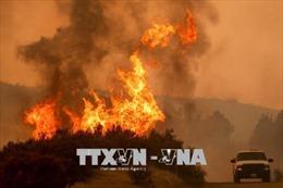 Đức nỗ lực khống chế cháy rừng tại Brandenburg