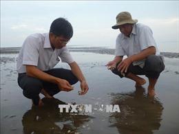Gần 300 ha nghêu ở xã Long Hòa (Trà Vinh) bị chết trắng