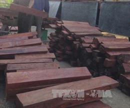 Bắt giữ, điều tra vụ vận chuyển trái phép gỗ nghiến ở Hà Giang