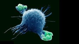 Nhận diện virus có thể tăng cường miễn dịch cho cơ thể