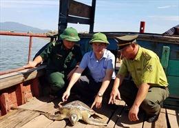 Rùa biển quý hiếm gần 40 kg được thả về biển
