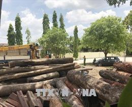 Vụ bắt giữ gỗ lậu quy mô lớn tại Đắk Nông: Khởi tố và truy nã thêm 2 bị can