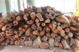 Xét xử vụ án buôn lậu gỗ trắc sau 3 lần trả hồ sơ điều tra bổ sung