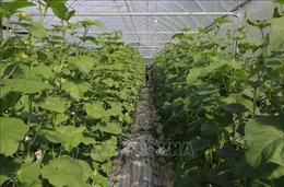 FLC sẽ đầu tư 1,5 tỷ USD vào nông nghiệp